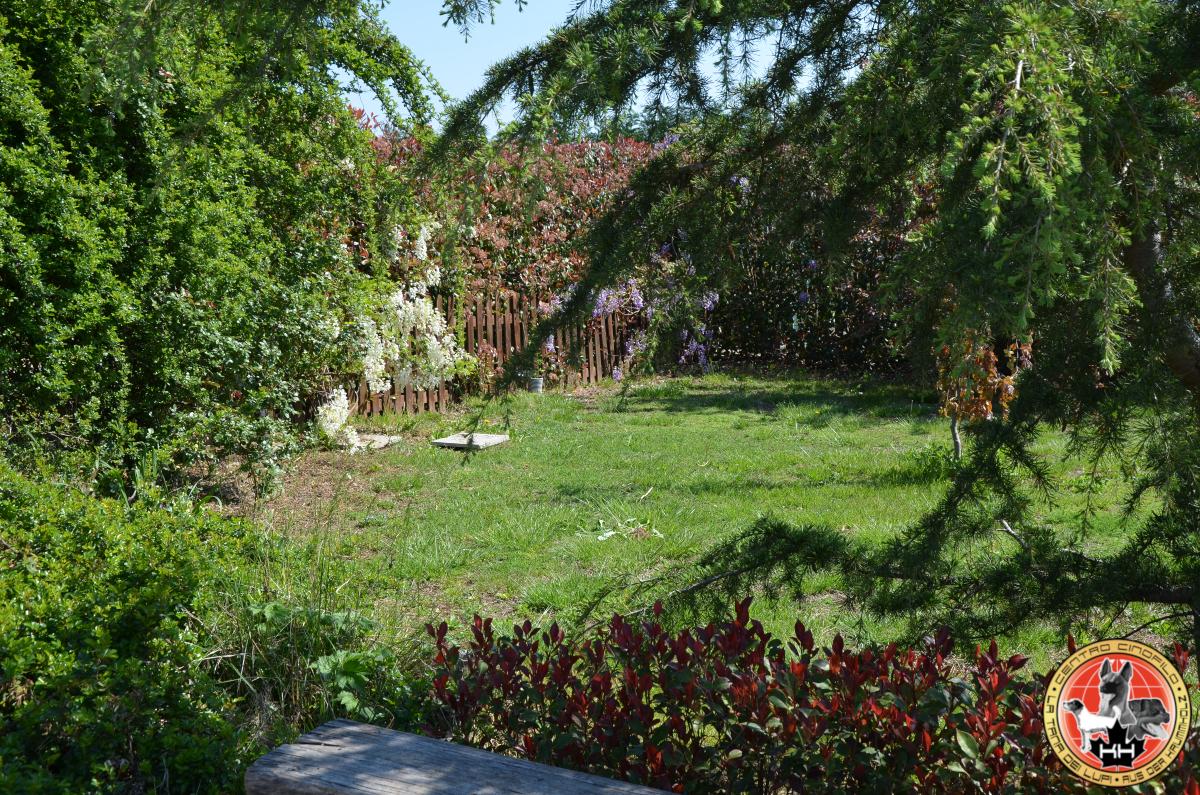 Centro Cinofilo LA TANA DEI LUPI Allevamento Rottweiler e Malinois Addestramento Cani Multi Razza Pensione Cani e Gatti a Mercenasco Torino Piemonte 9